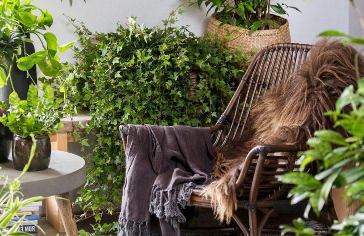 Pflegeleichte Zimmerpflanzen Ratgeber