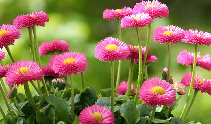 Beliebte Frühlingsblüher
