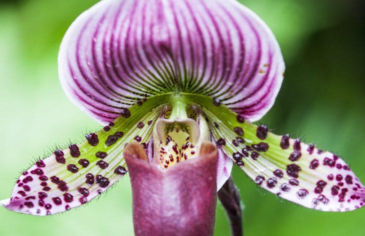 Orchideen Lexikon